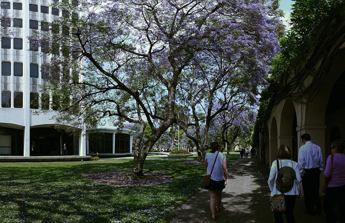 A view of the Caltech campus